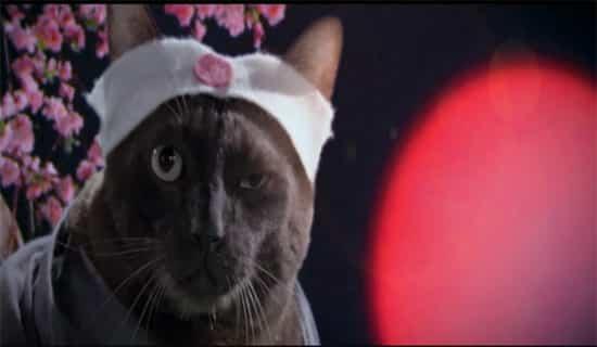 cat a wabb